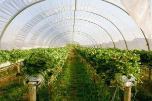 greenhouse-2096497_1920